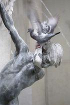 Die Vögel - The Birds