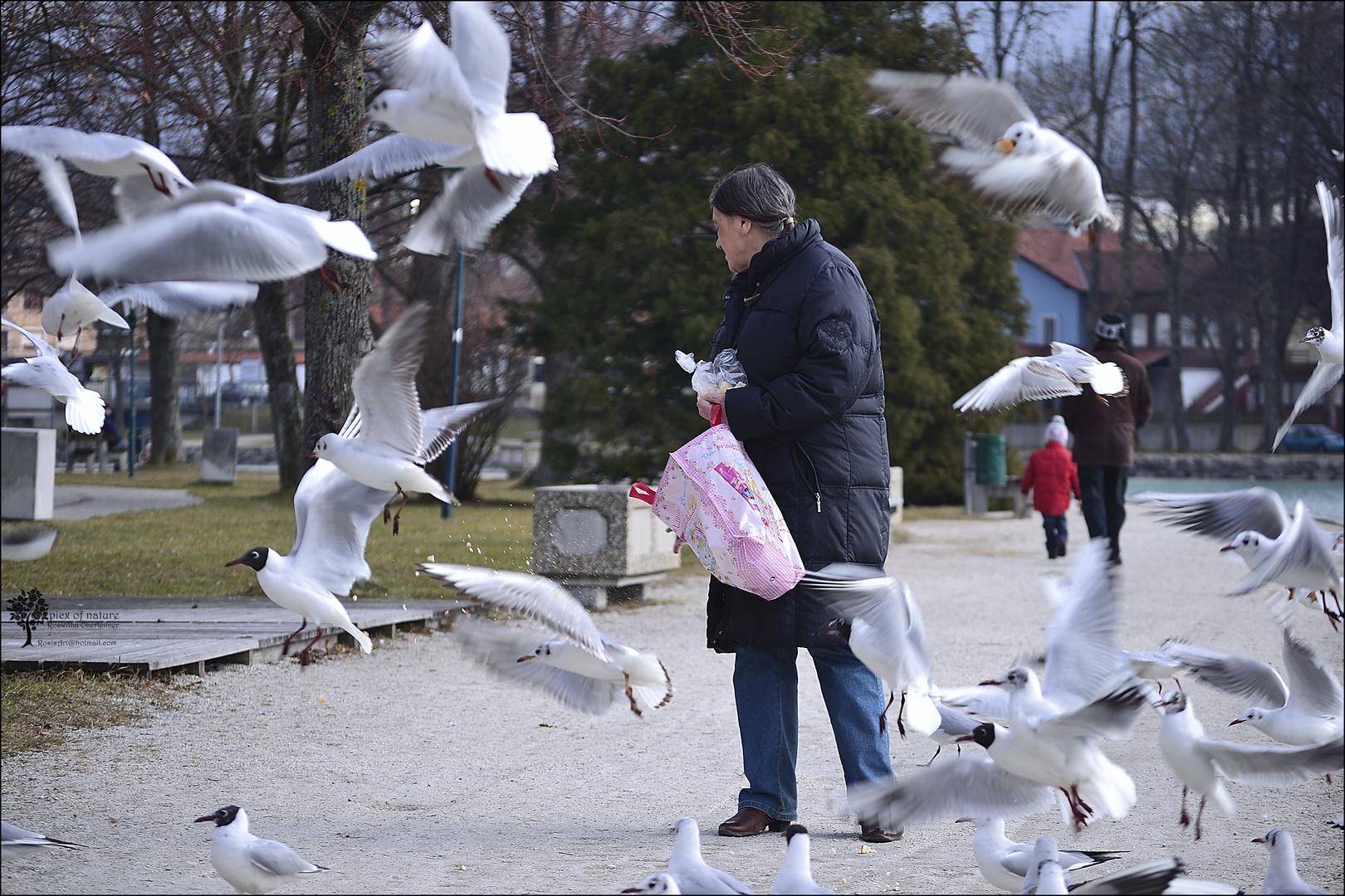 die Vogelfrau
