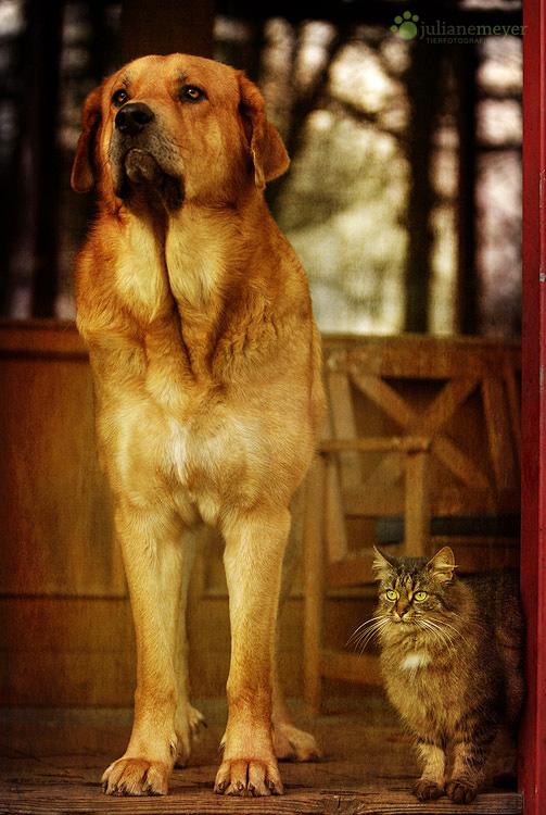 Die Wächter