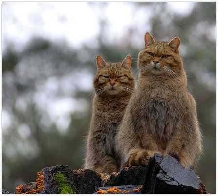 Die Wächter des Wildparks