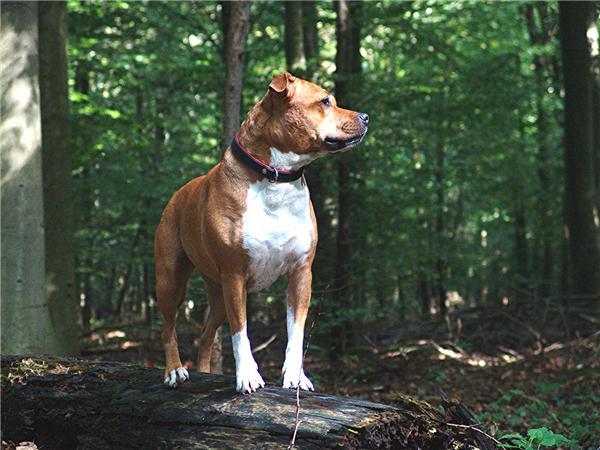 Die Wächterin des Waldes.