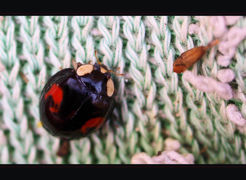 Die wärmebedürftigen Käfer...