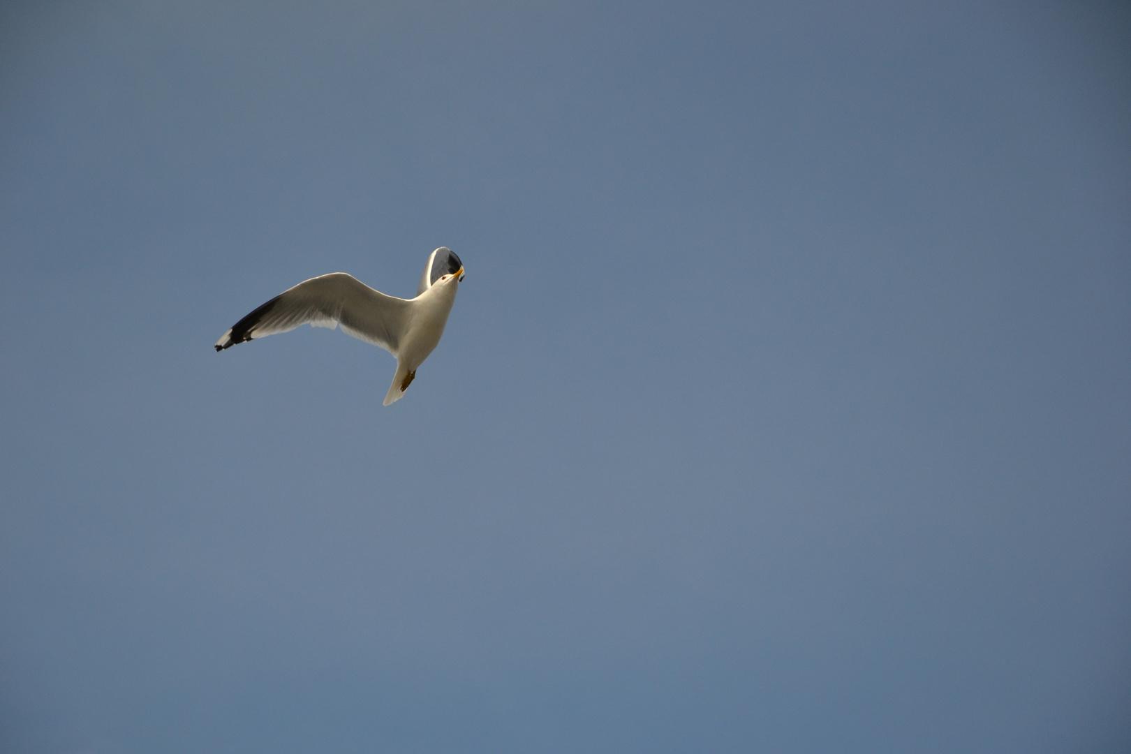 Die wahre Freiheit haben nur die Vögel