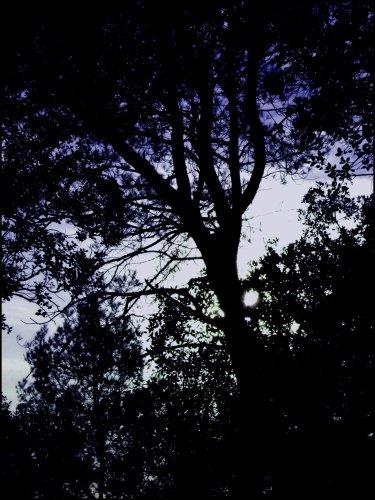 Die Wald.