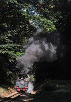 Die Waldeisenbahn Muskau ...