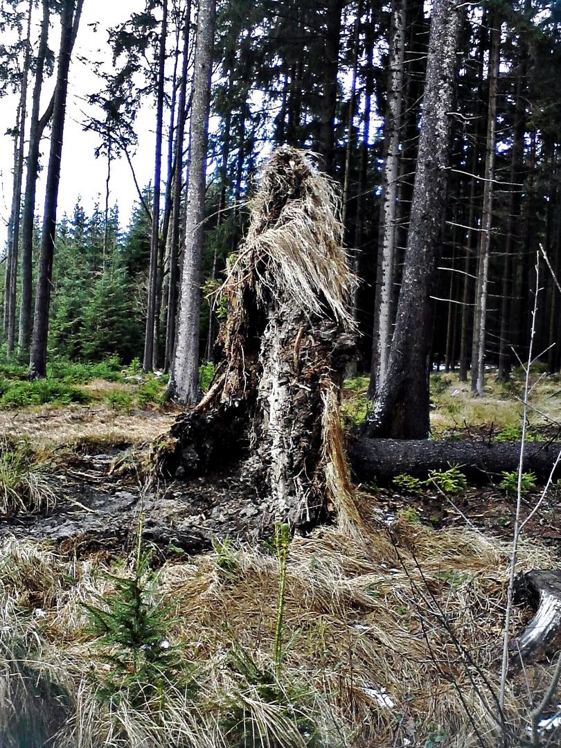 Die Waldhexe