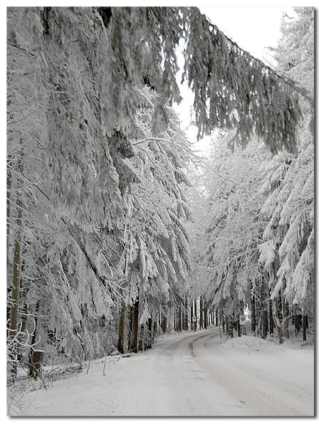 Die Waldstrasse