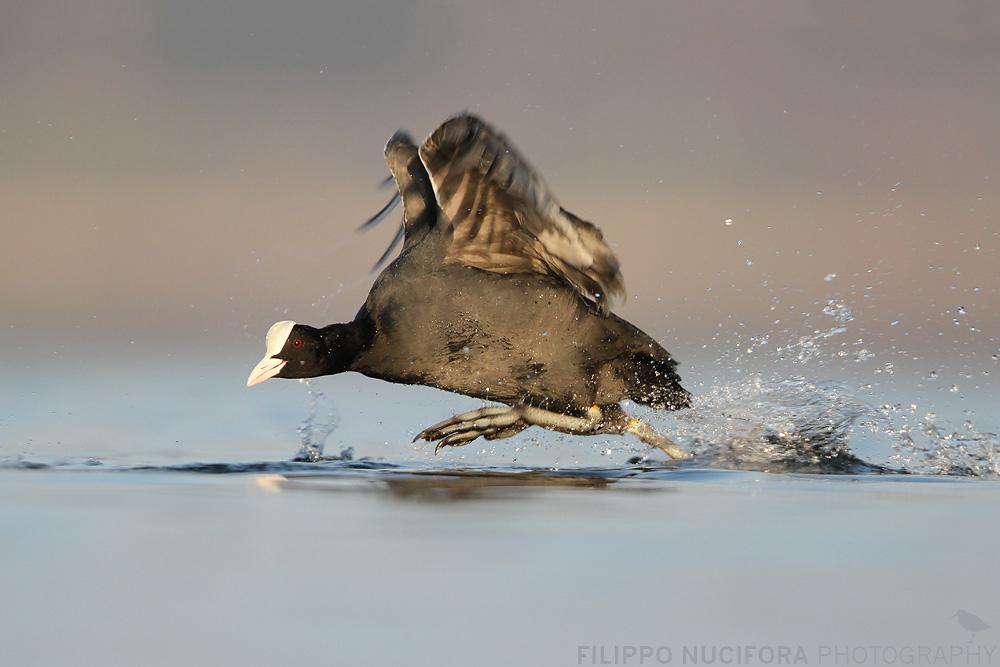 *Die Wasserläuferin*...