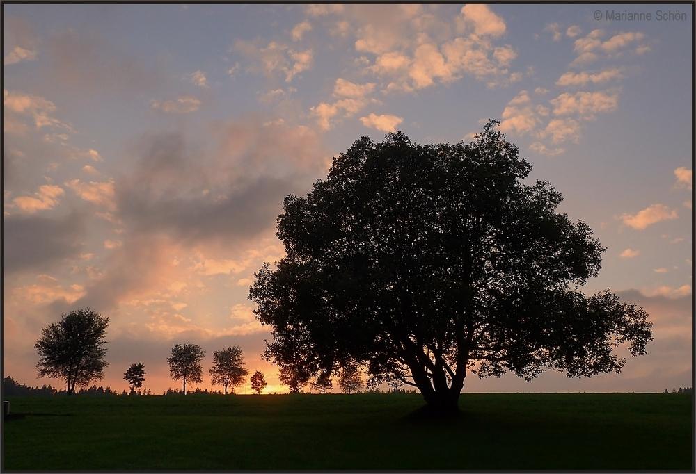 Die Weide im Abendlicht...