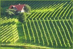 Die Weinbauern sind hier die Landschaftsarchitekten.