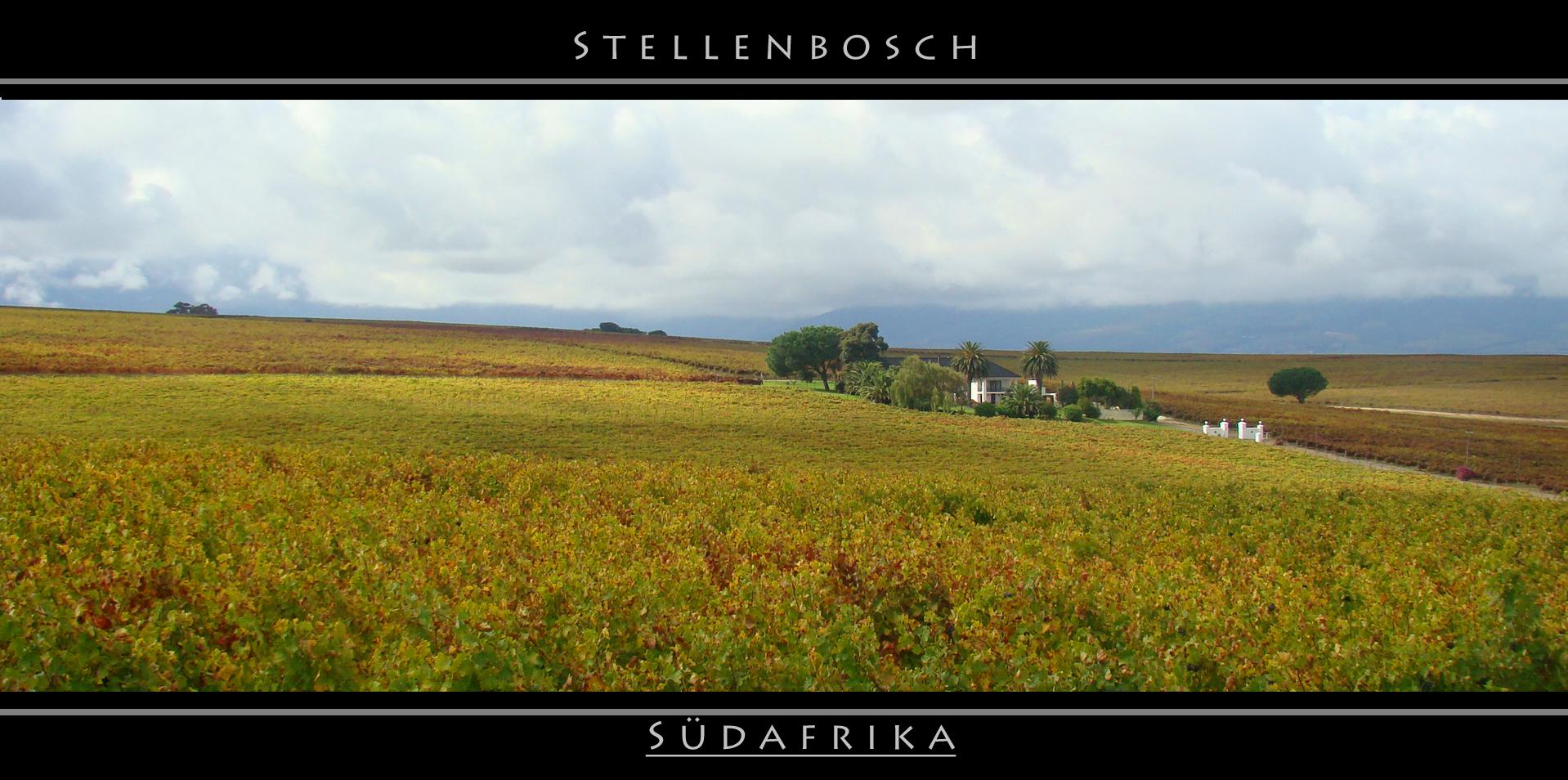 Die Weinberge von Stellenbosch