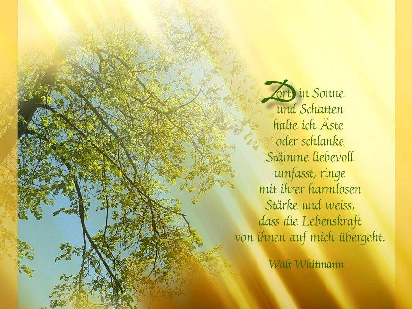 die Weisheit der Bäume (3)