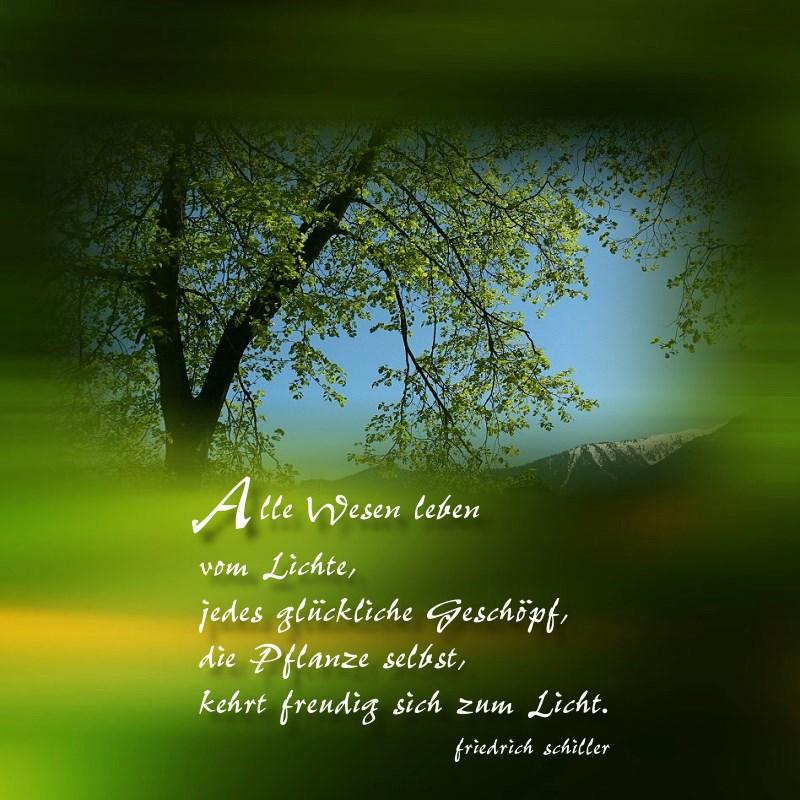die Weisheit der Bäume (4)