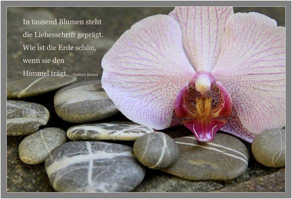 Die Weisheit der Steine