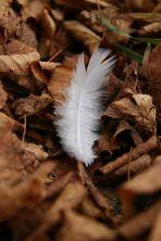 Die weiße Feder im Laub