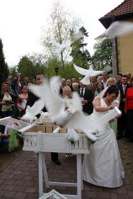 Die weißen Tauben fliegen