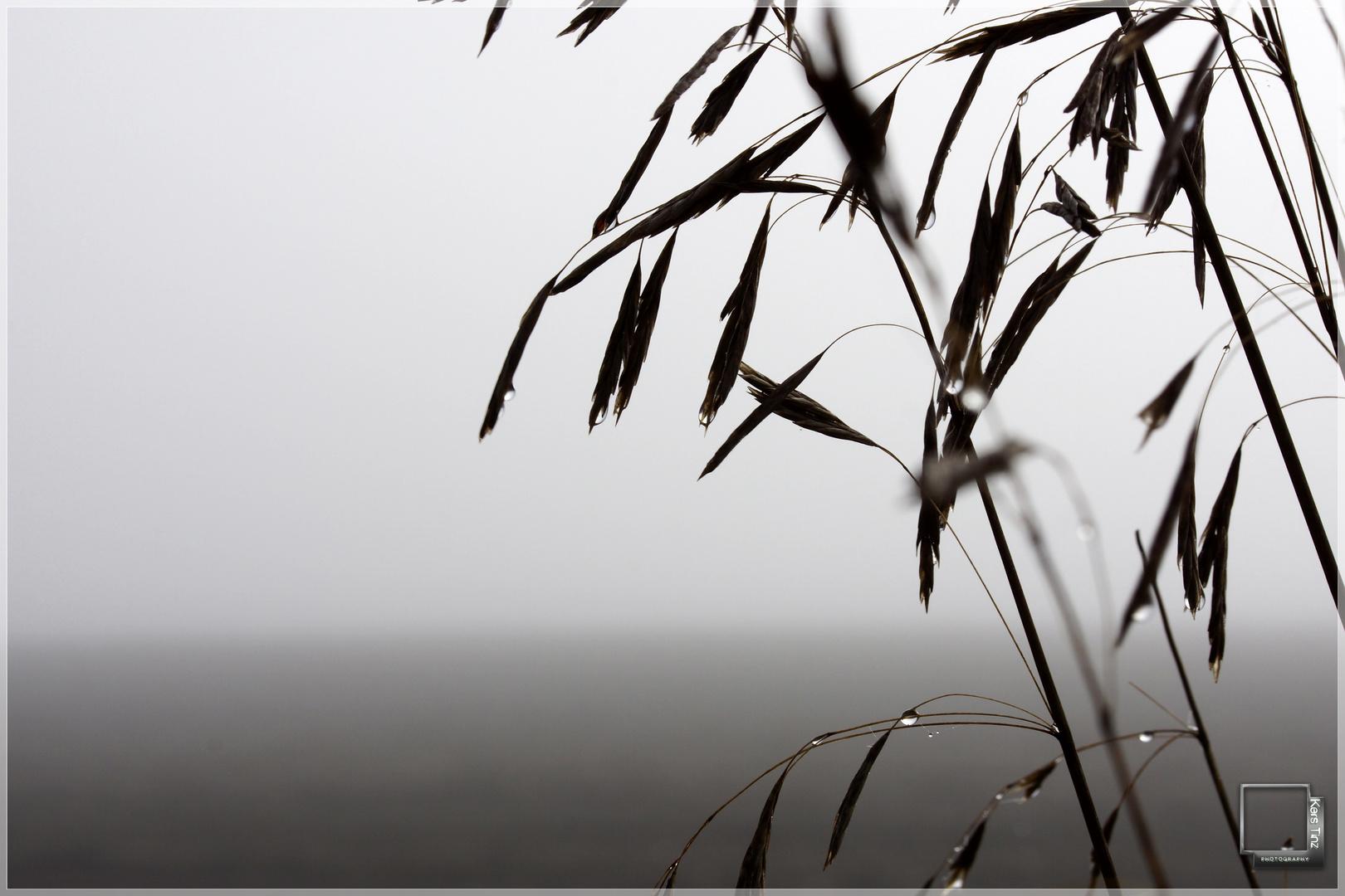 Die Welt versinkt im Nebel