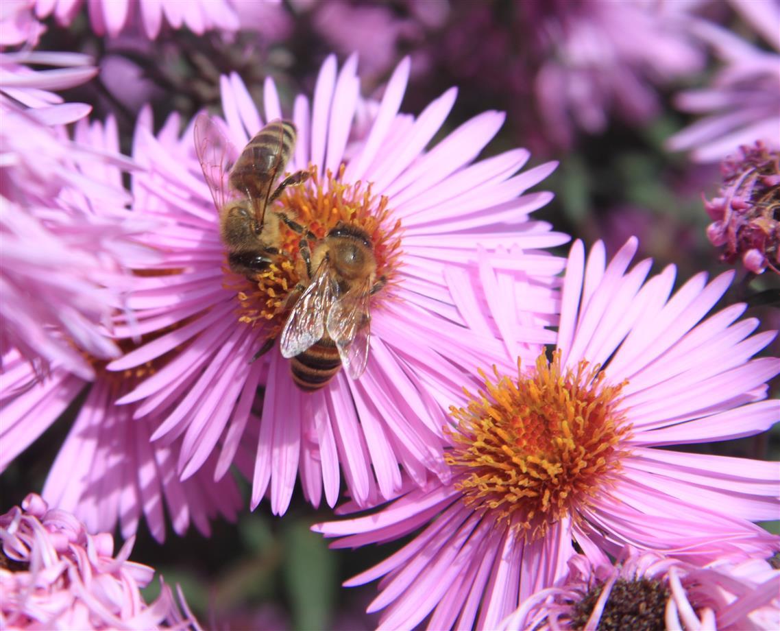 Die Wespen bei der Arbeit ..........