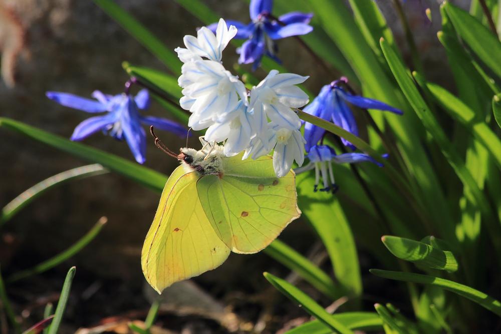 Die Wiedergeburt des Frühlings