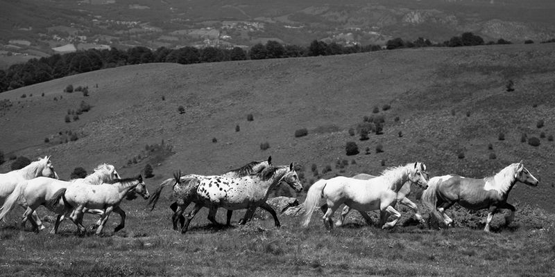 Die wilden Pferde der Pyrenäen