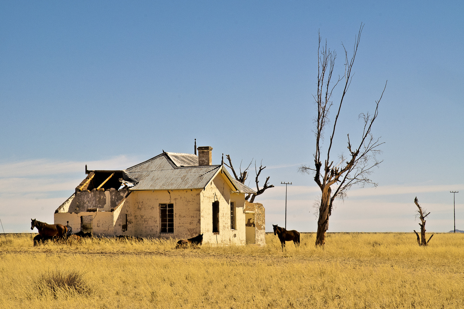Die Wildpferde der Namib - 3