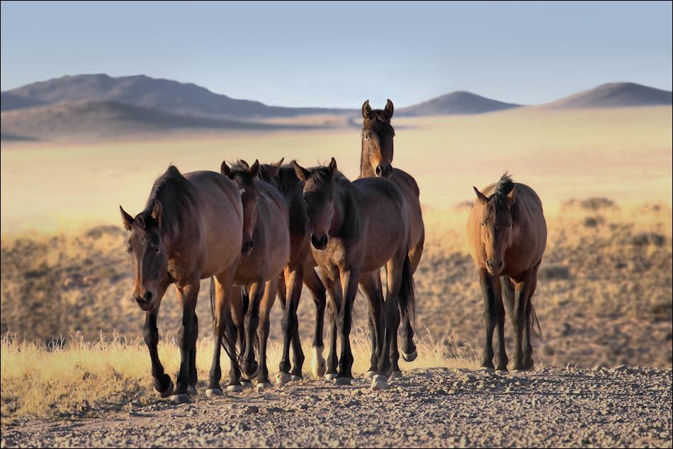 die wildpferde von garub foto bild world pferde. Black Bedroom Furniture Sets. Home Design Ideas