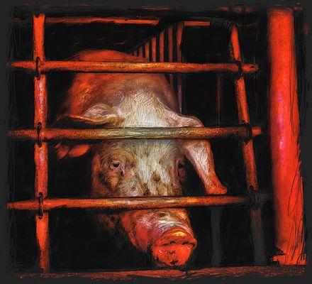 Die Würde des Schweins ist unantastbar!