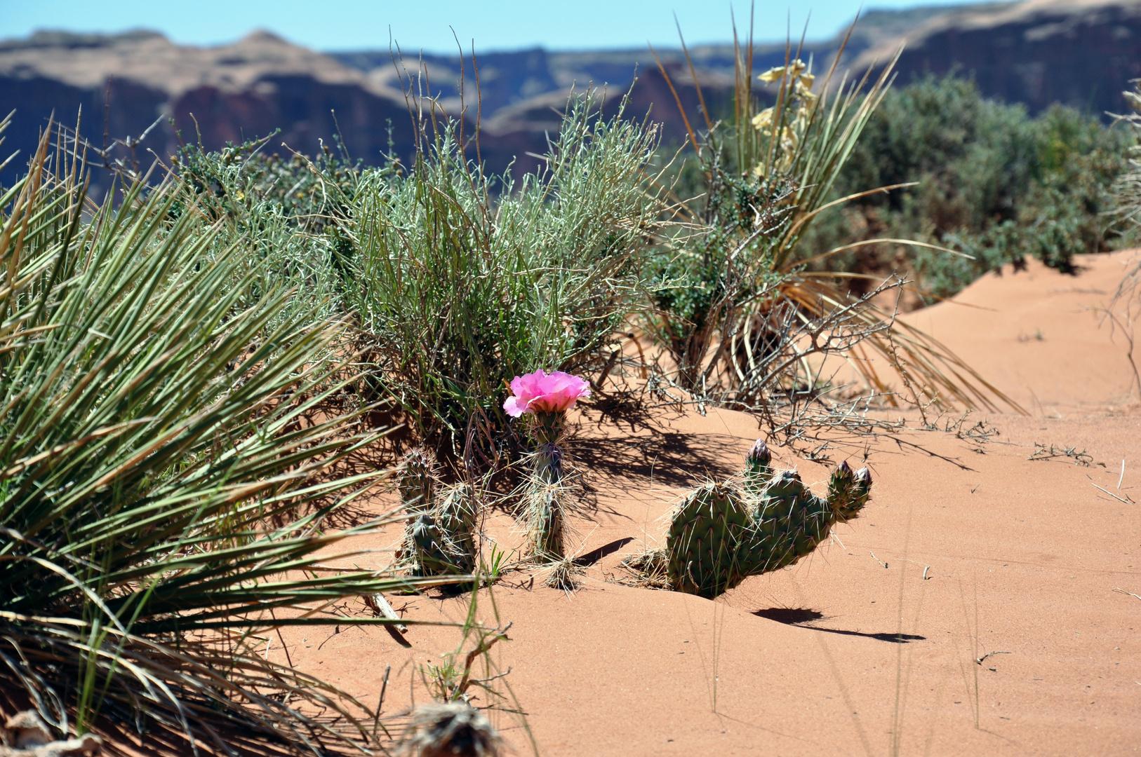 ....die Wüste kann so wunderschön sein!