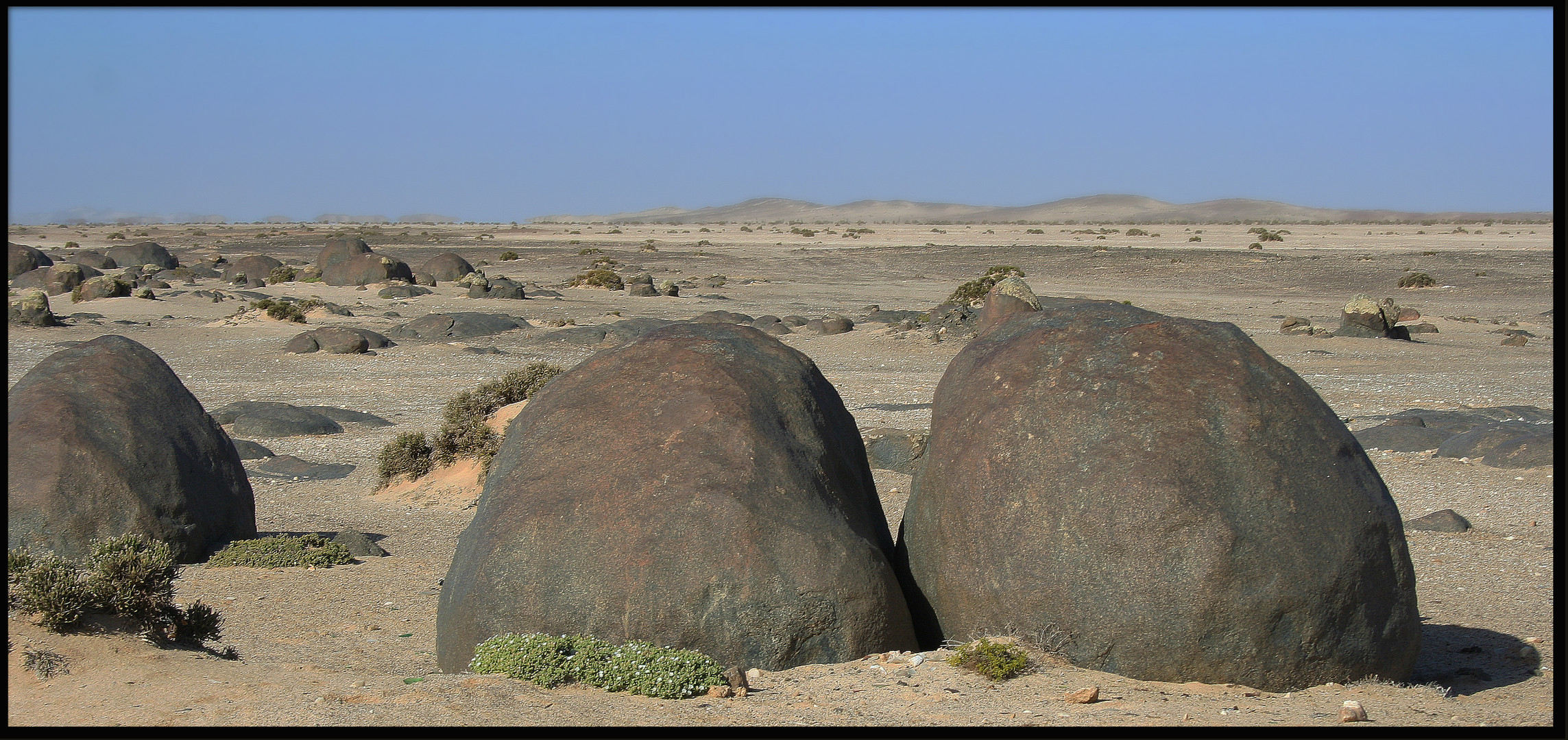 Die Wüste lebt.