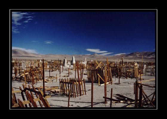 die Wüste lebt...