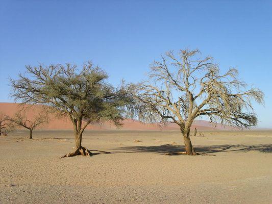 Die Wüste lebt?!