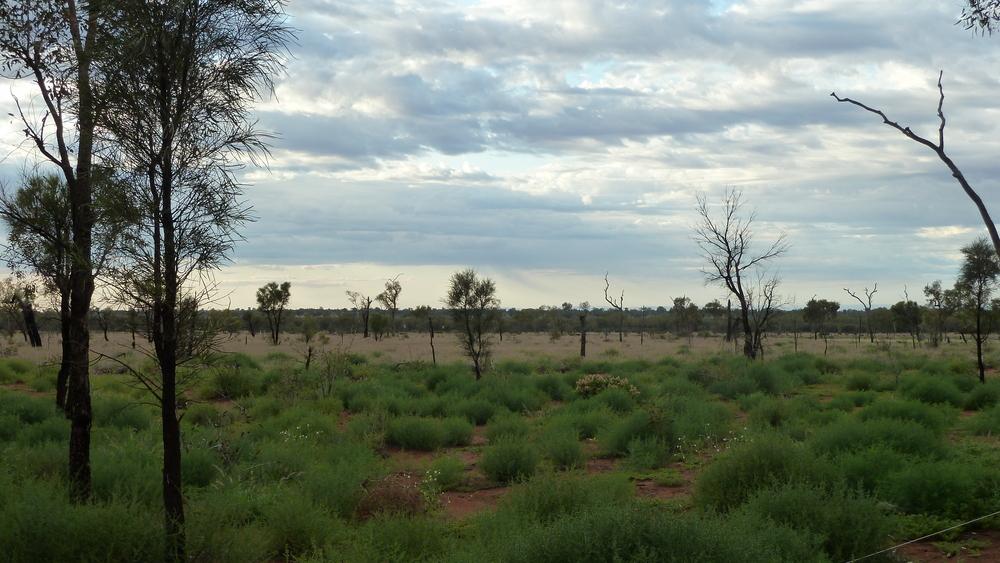 die Wüste lebt Northern-Territory
