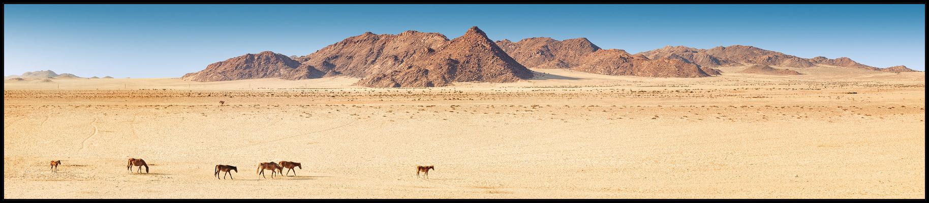 Die Wüstenpferde von Garub
