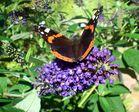 Die wunderbare Welt des Schmetterlings