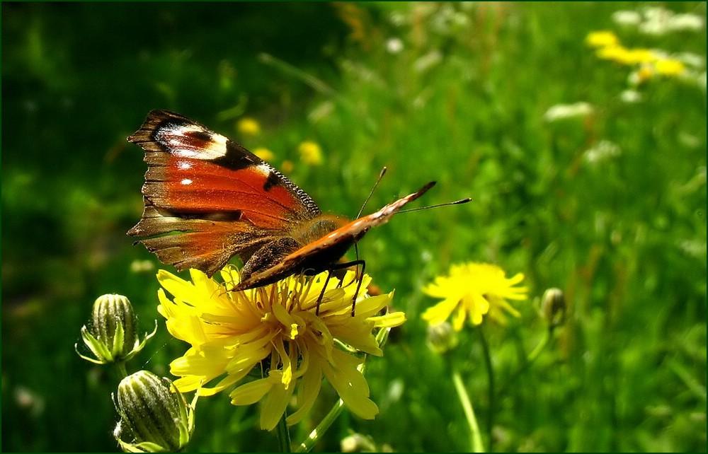 Die wundervollen Farben der Natur