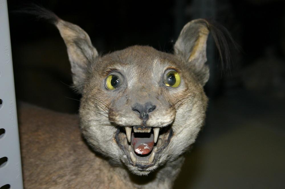 Die Zahnfee