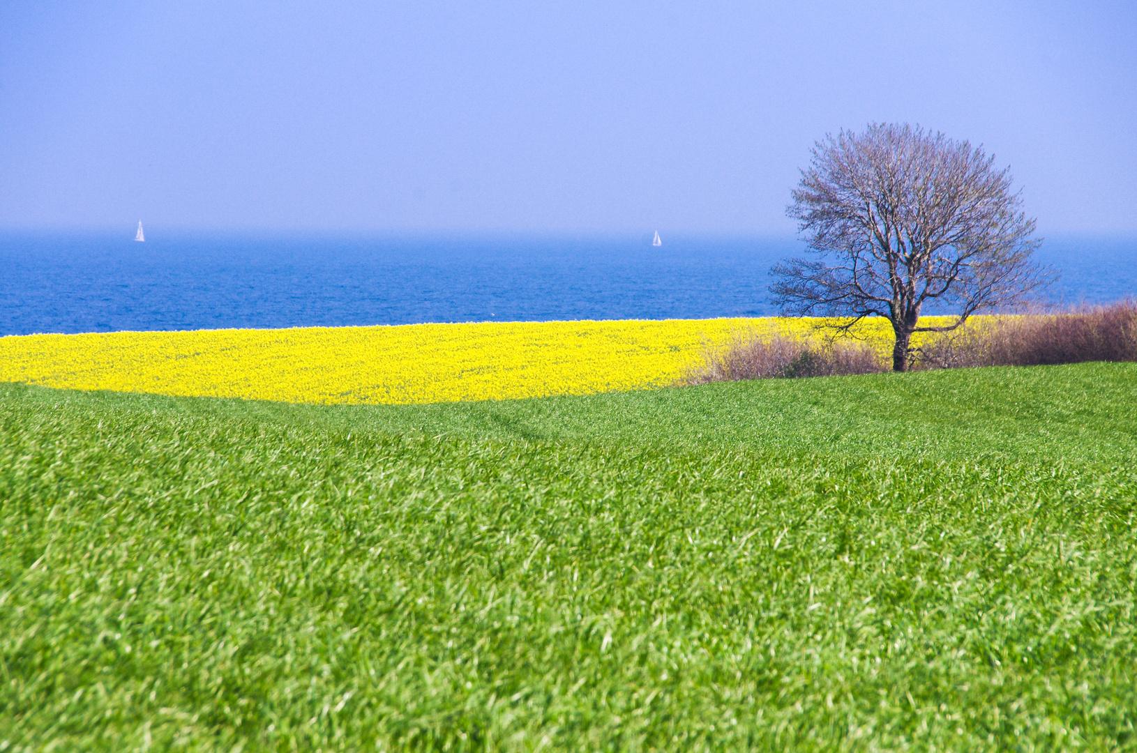 Die Zeit der gelben Blüte