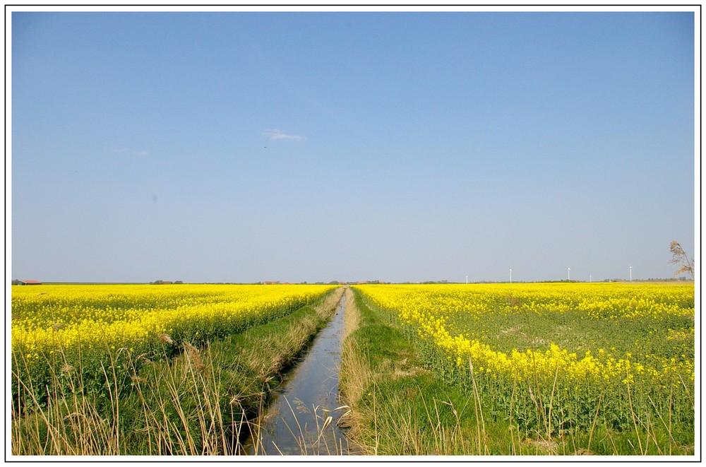 Die Zeit der gelben Felder in Ostfriesland