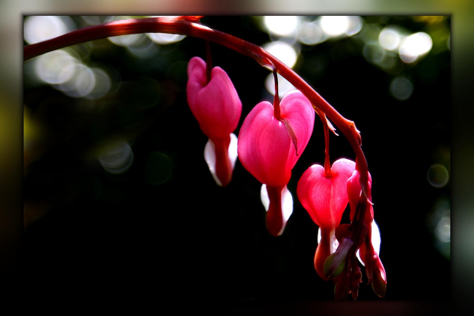 Die Zeit der Herzen