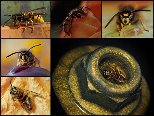 Die Zeit der Wespen...