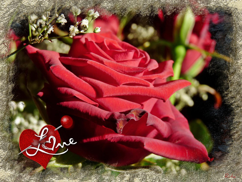 die Zeit für die Liebe…