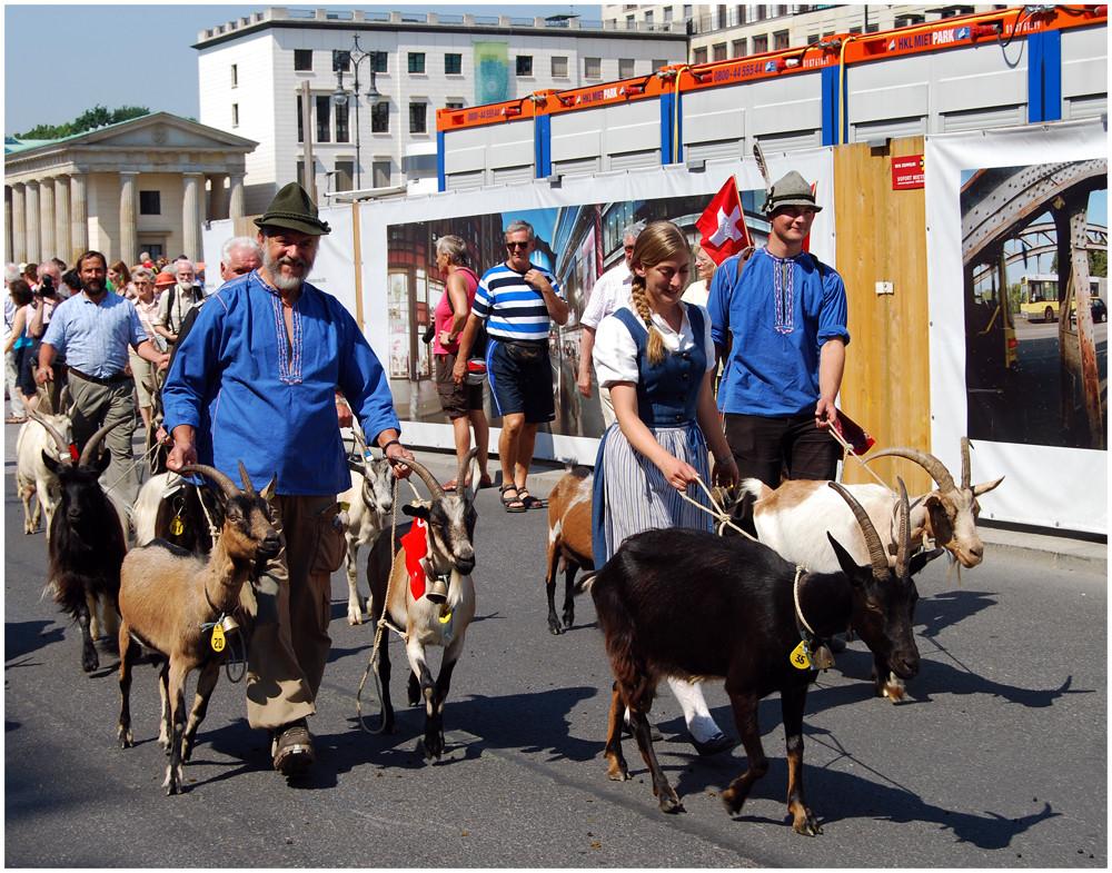 """... die """" Ziegenparade """" nimmt noch kein Ende"""