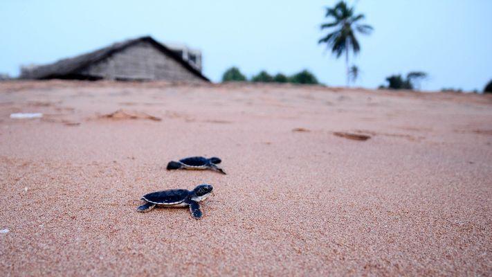 Die Zukunft der Meeresschildkröten