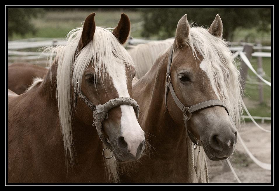 Die zwei Blondinen....