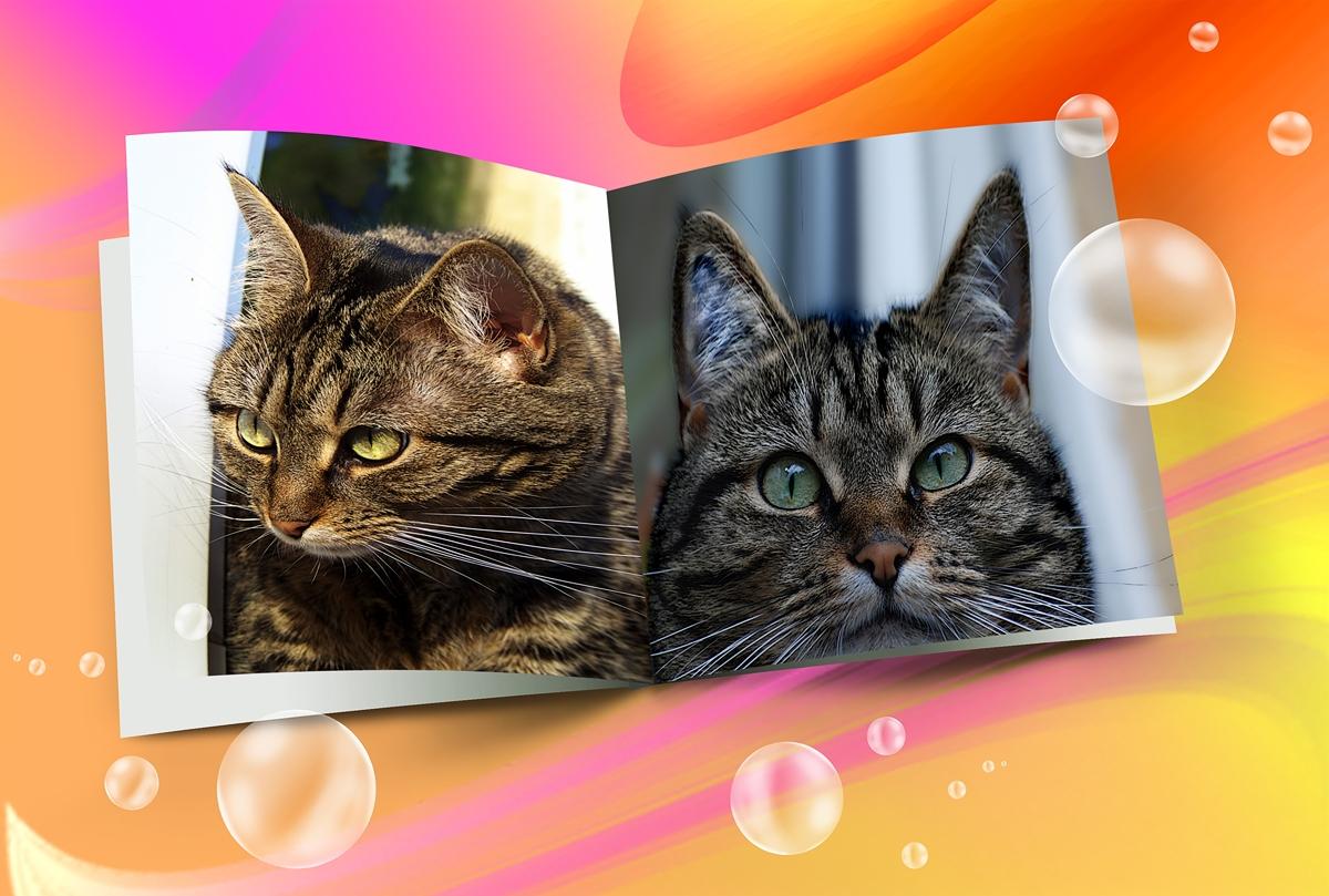 Die zwei Gesichter einer Katze