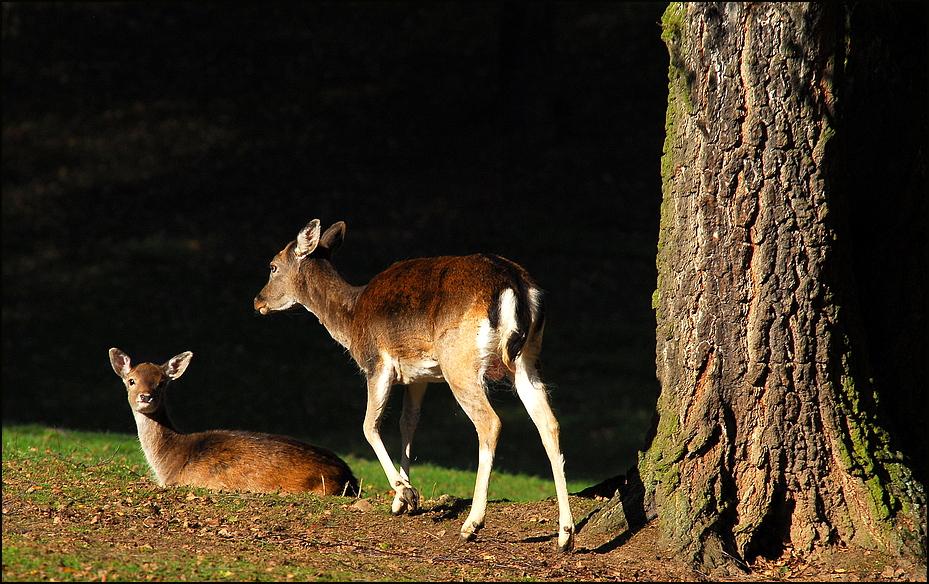 Die Zwei im Wald......