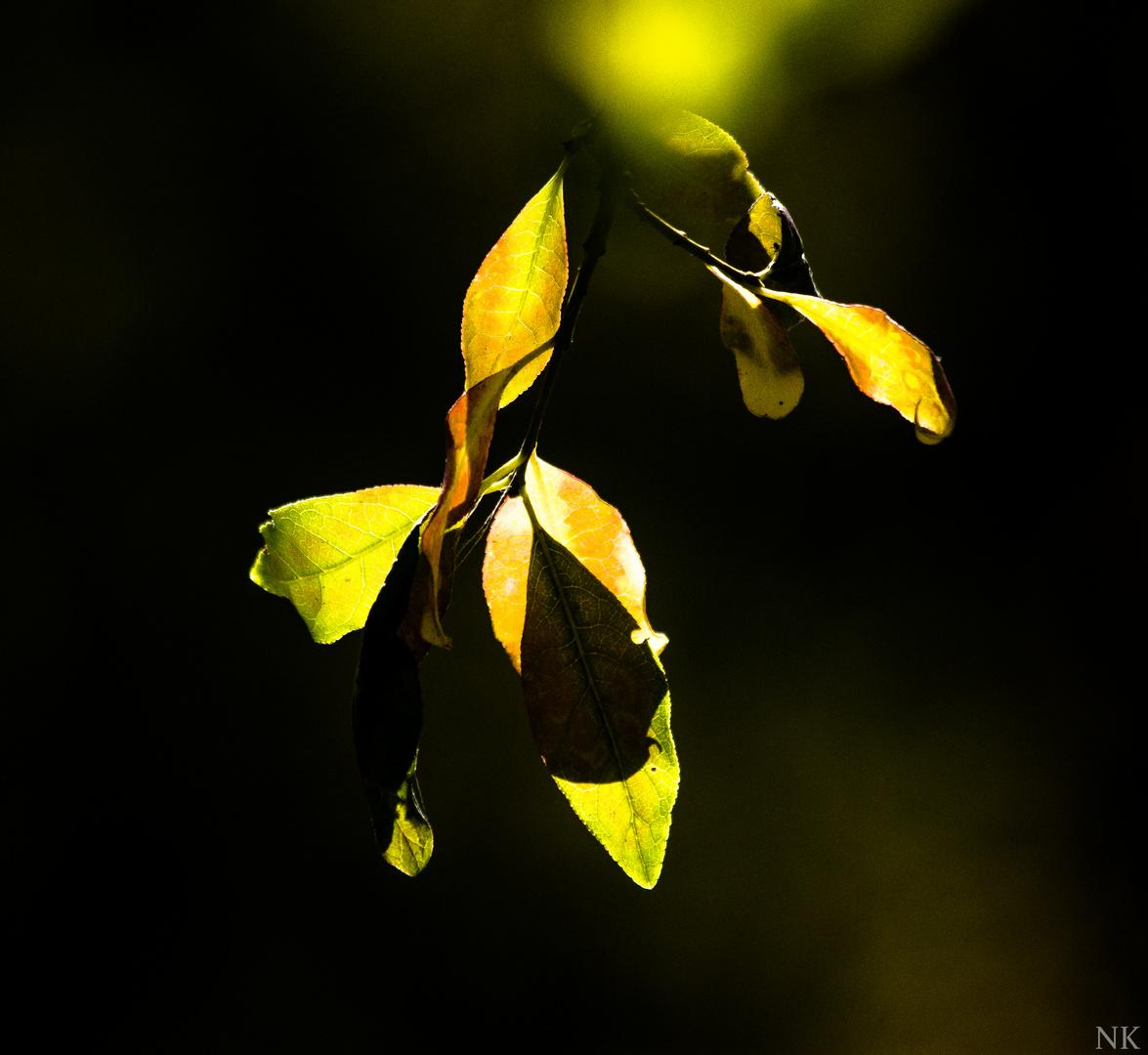 Diedersdorfer Blätter