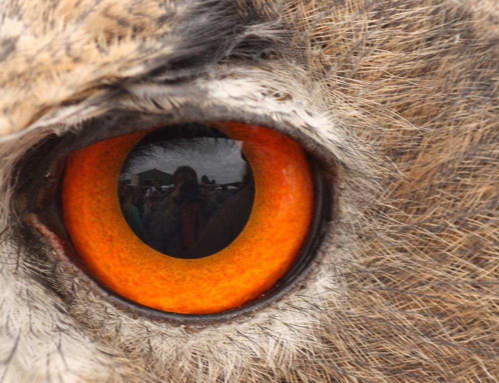 Diese Augen