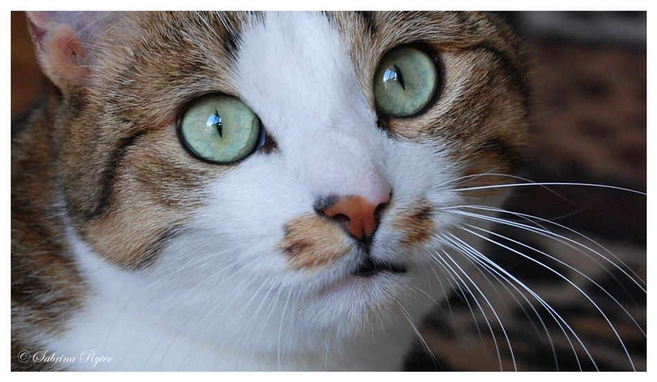 Diese Augen...