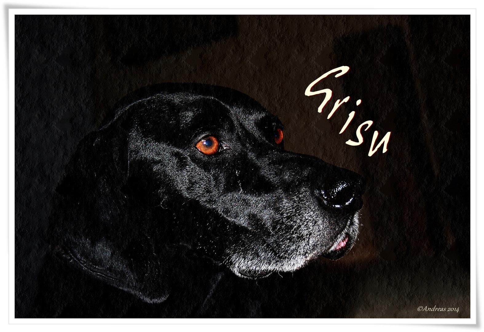 """""""Diese Augen"""" Hundeportrait"""